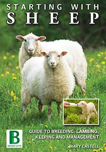 STARTING WITH SHEEP