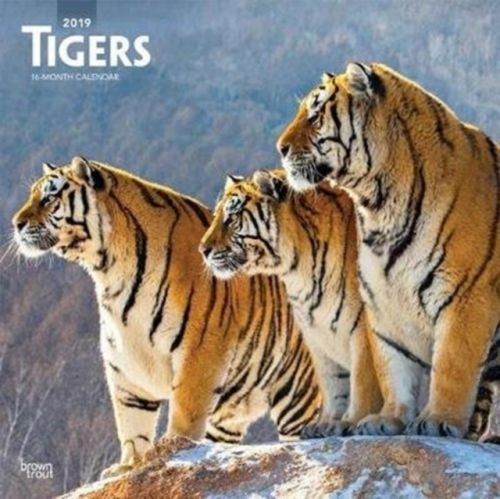 Tigers 2019 Square Wall Calendar