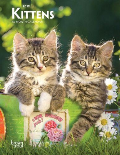 Kittens 2019 Diary